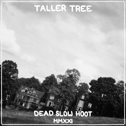 "Dead Slow Hoot – ""Taller Tree"""